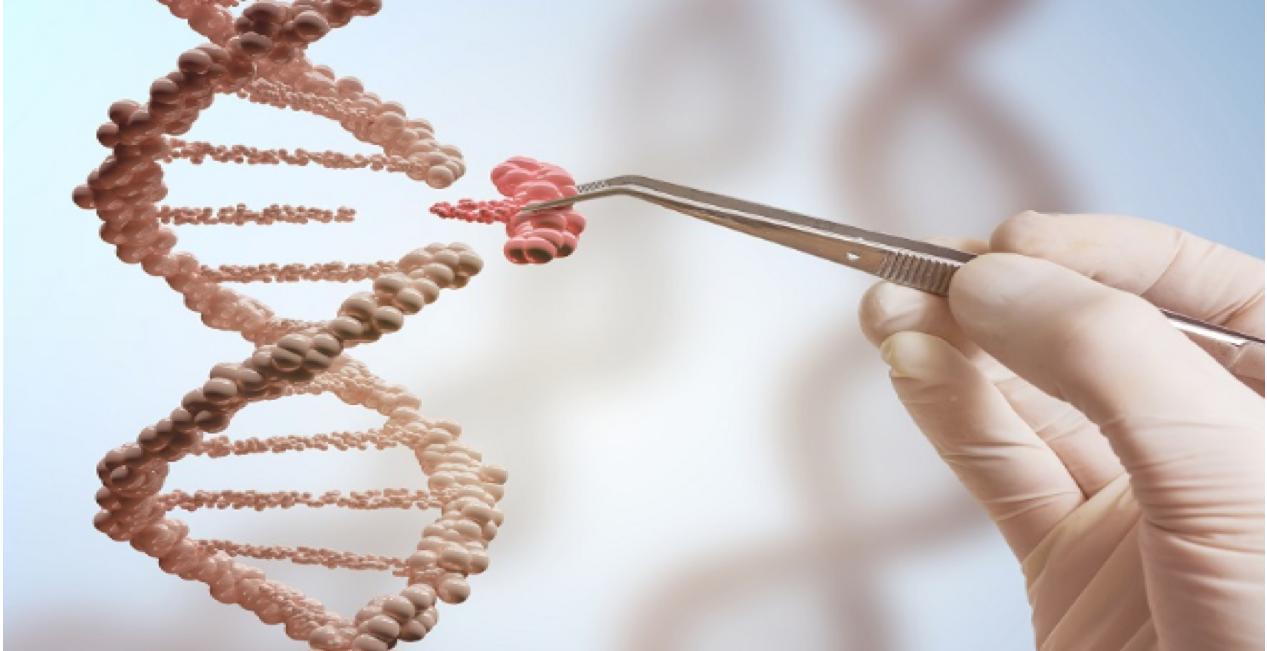 Los profesores del Departamento de Química se forman en técnicas de manipulación genética